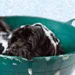 First Puppy Grooming: 5 Tips to Prepare for the Trip