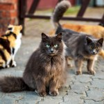 Do Not Prohibit Feeding Community Cats During Corona Virus Outbreak