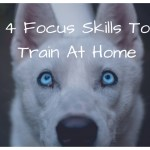 4 Focus Skills To Train Your Dog At Home- #Covidpetstrong