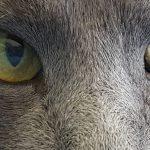 Looking at Cats Looking at Me