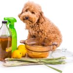 Household Cleaners That Will Harm Your Pet