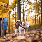 8 Reasons Why You Should Regularly Walk Your Dogs