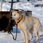 Should Chaining Dogs Be Illegal Nationwide?