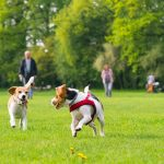The science behind how pets boost health and wellbeing