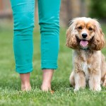 8 Dog Care Tips: The Ultimate Pet Parent's Guide