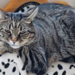 Purring Along: 7 Healthy Cat Diet Tips