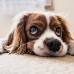 Dog-Proofing Your Home – Simple And Easy Steps To Protect Your Pooch