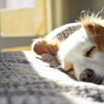Eight most common types of skin conditions in dogs
