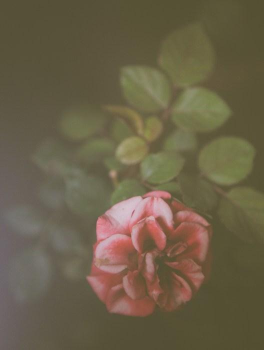 Petra Fantozzi. Fotografia Emozionale. Rosa