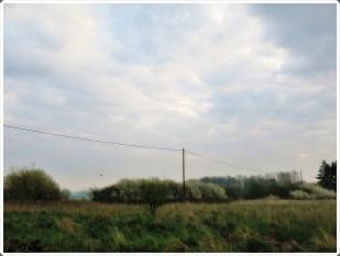 12-April *home* - blühende Wildhecke
