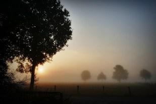 18-Oktober Hunderunde, ein toller Morgen!