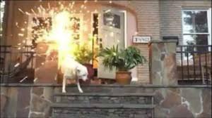 Georgia fireworks dog