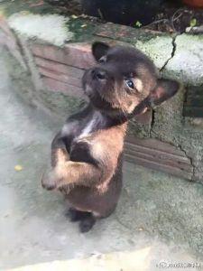 puppy hugging 4