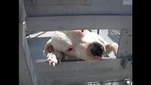 Deaf dogs rescued 2