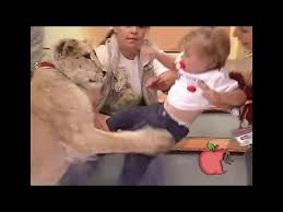 Lion snatches up baby on live tv