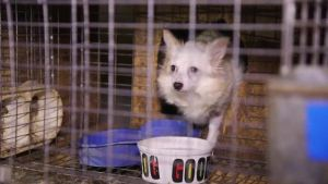Miss puppy mill bust 2