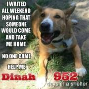 dinah-needs-a-home