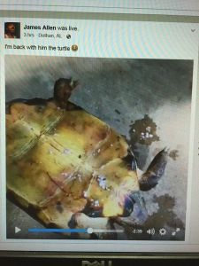 Dotham man lights turtle 3