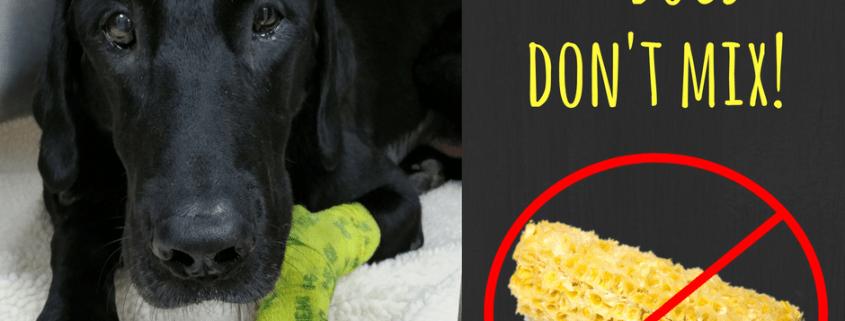 dozer-and-corn-cob