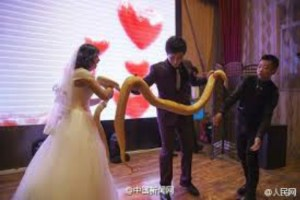 pythons-for-bride-and-groom-2