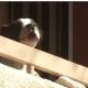 Dog abandoned on apartment balcony