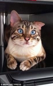sky-cat-3