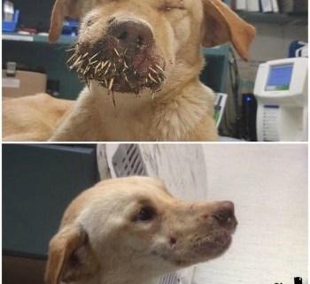 bright-eyes-dog-rescue