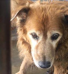 Seeing Eye Dog Adoption California