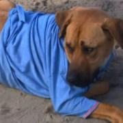 junior-the-dog