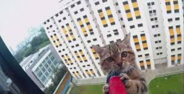 kitten-saved-from-12-story-ledge