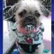 Dog stolen in car-jacking incident