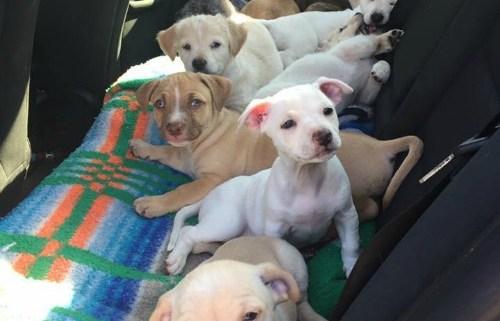 ten-puppies