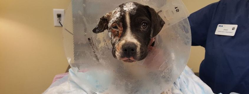 Puppy severely injured