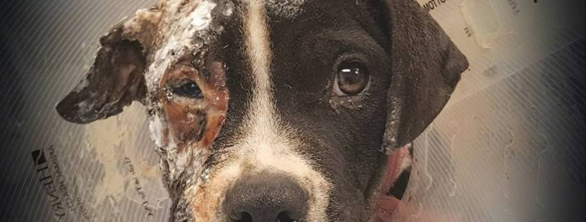 Puppy died after being burned and beaten