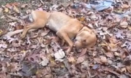 Dead and dying dogs found in woman's yard