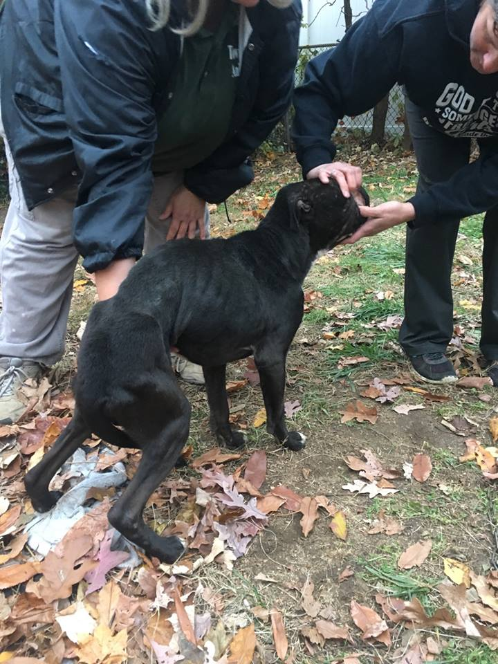 Dead and dying dogs found at home