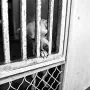Sweetheart waits alone behind bars