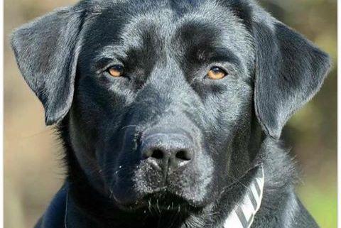 Fallen Canine Officer Payne