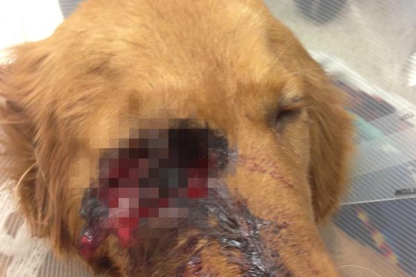 Big Dog Rescue Illinois