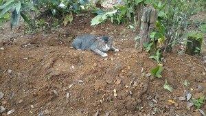cat-misses-owner-3