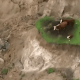3 Cows stranded after earthquake