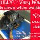 Very weak Rottweiler in need