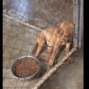 Sad and terrified puppy
