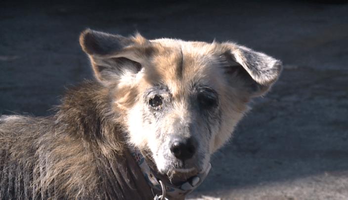 Forgotten senior dog, Bella
