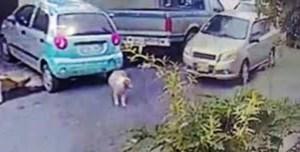 dog-run-over-3