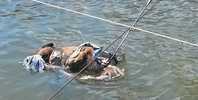 dog-tortured-on-gold-coast-cover