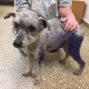 good Samaritan rescues suspected bait dog