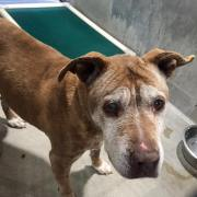 No one has claimed senior dog at animal control
