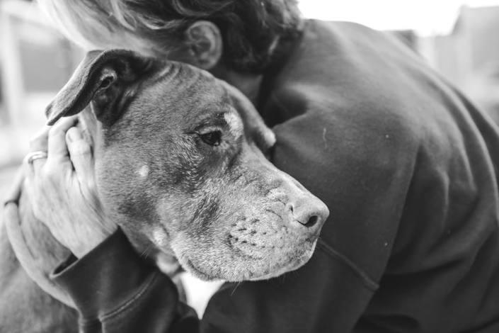 A surrendered dog's hope is dwindling