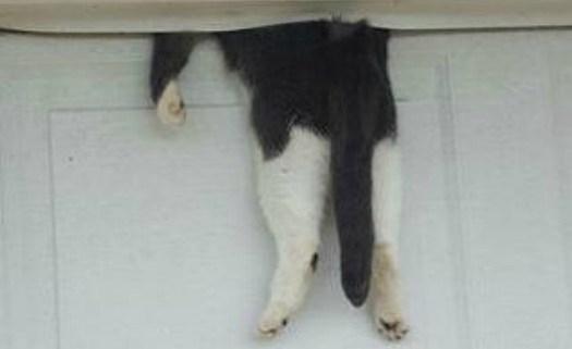 cat-pinned-on-top-of-garage-door